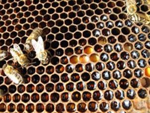 Башкирский мед. Перга