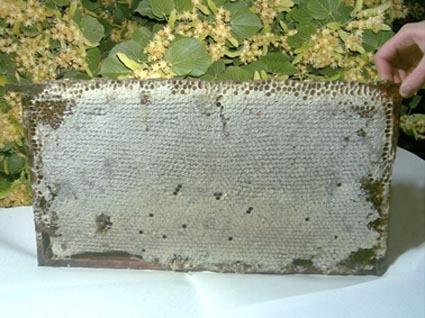 Башкирский мед. Соты